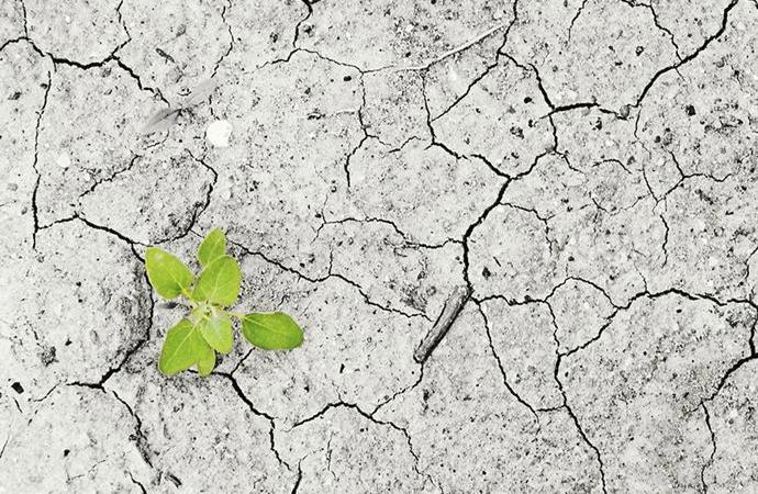 Son iki buçuk asırda 571 bitki türü yok edildi