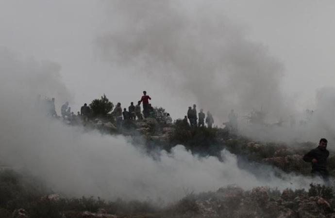 Filistinlilere ait yüzlerce zeytin ağacını yaktılar