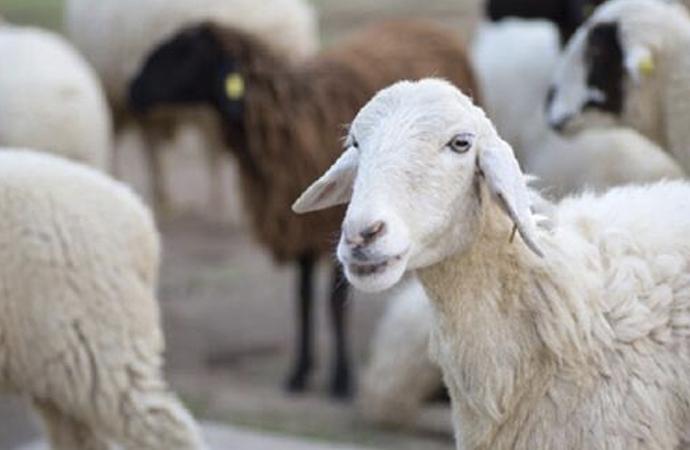 'Acemi kasaplar nedeniyle etin yüzde 15'i çöpe gidiyor'
