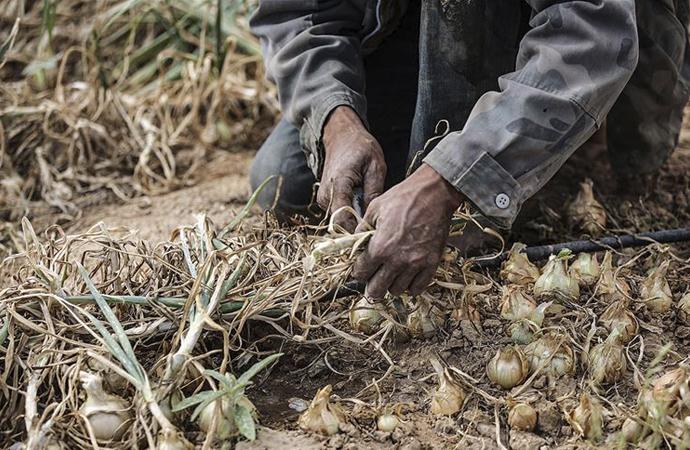 İsrail baraj kapaklarını açtı, Gazze'ye tarımsal zarar verdi