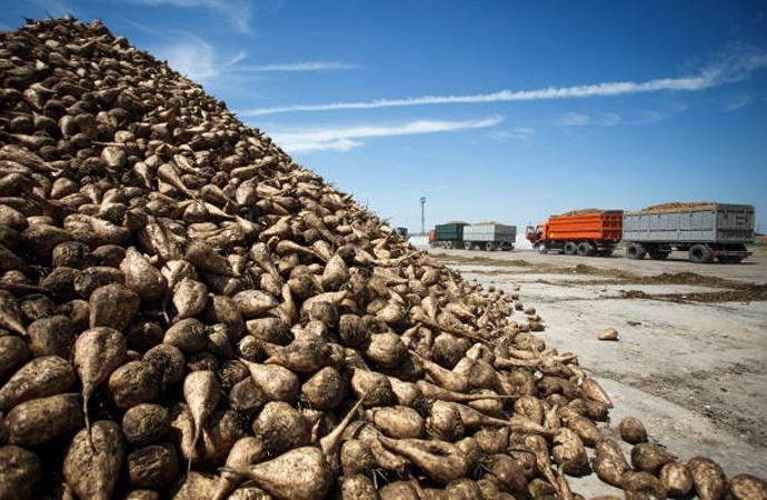 Şeker-İş Başkanı Gök: Gıda gibi stratejik sektörlerde yapılan özelleştirmeler yanlıştır