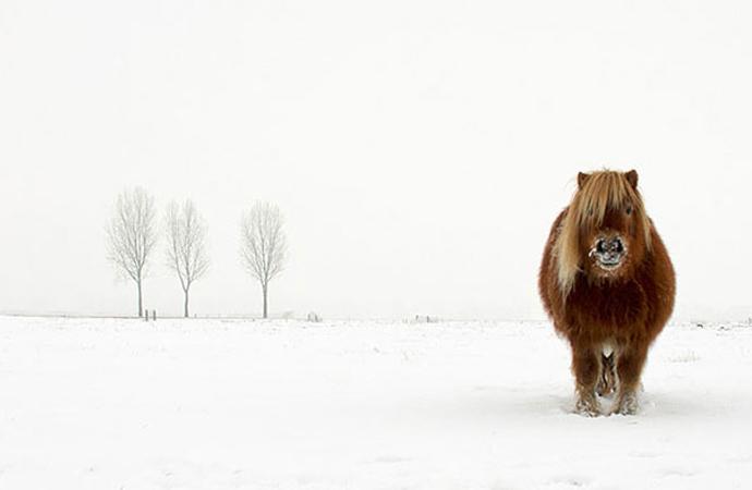 Hollanda'da, soğuklarda yabani hayvanları besleyenlere ceza verilecek