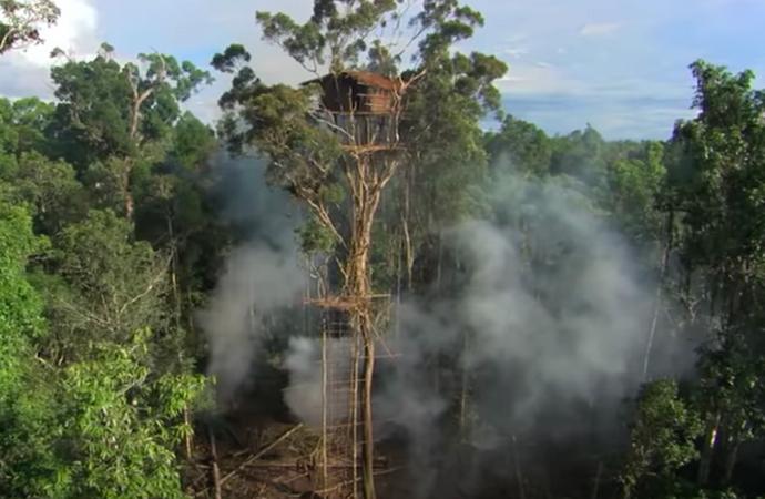 BBC'nin ağaç evleri belgeseli asparagas çıktı