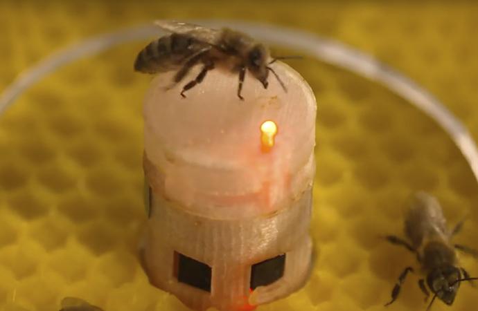 Arıların soyunu robotlar kurtaracak