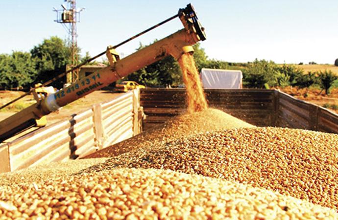250 Bin ton ekmeklik buğday ithal edilecek