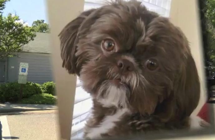 ABD'de vasiyet gereği sağlıklı köpeğe ötenazi yapıldı