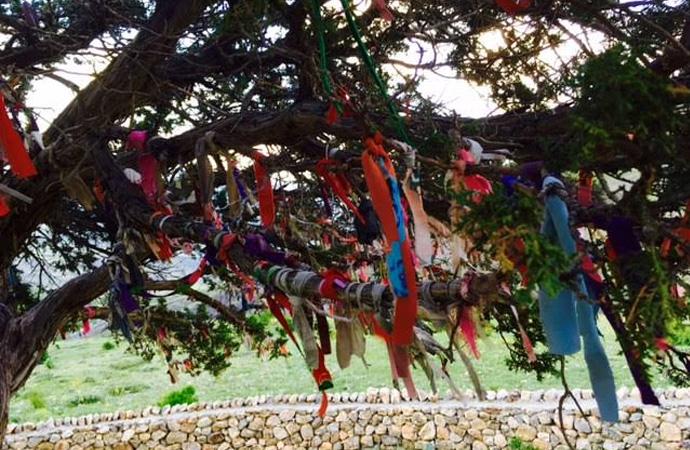Çam ağacı mı, Çaput ağacı mı?