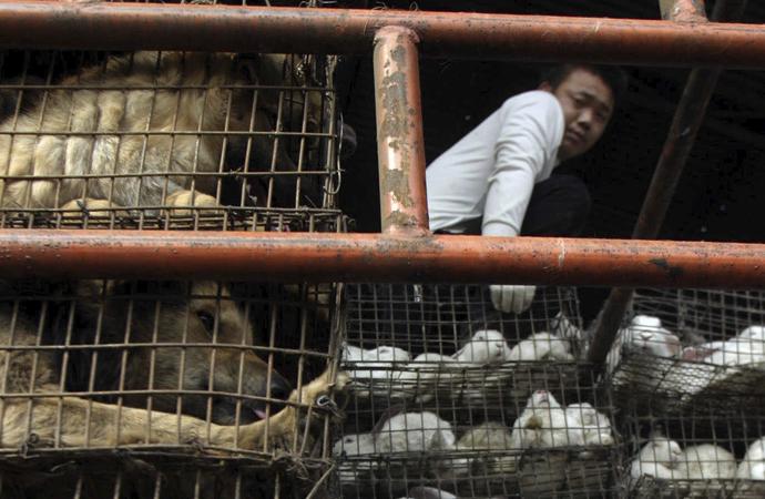 Çin'de o pazarlar yeniden açıldı