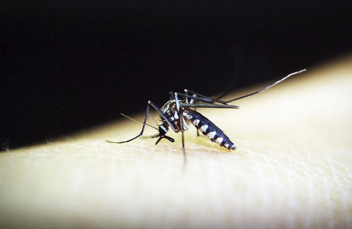 Sıtma dünya genelinde 2018'de 405 bin cana maloldu