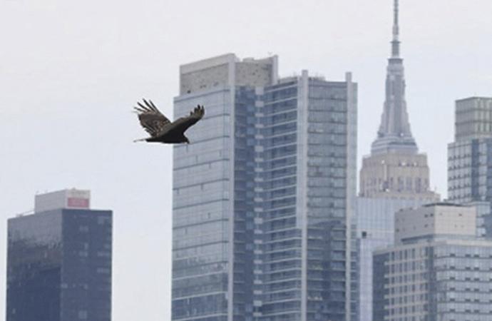 New York semalarında uçan akbabalar