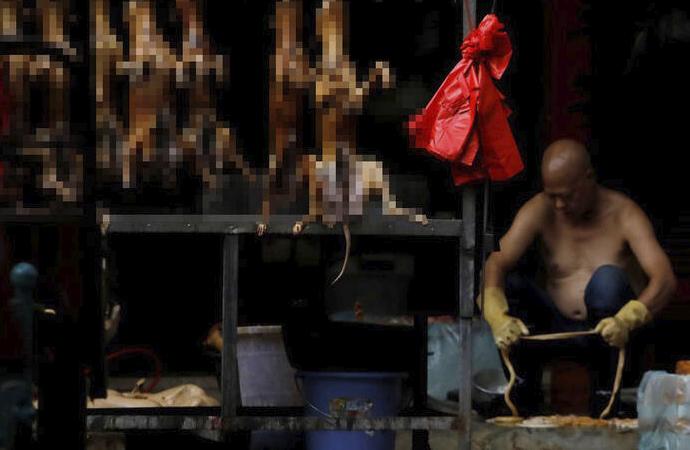 Çin'de köpek eti skandalı