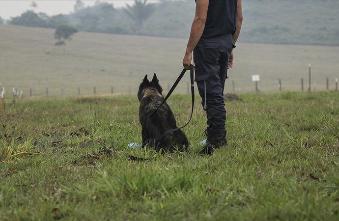 Köpeklerin koronavirüsü tespit edip edemeyecekleri araştırılacak