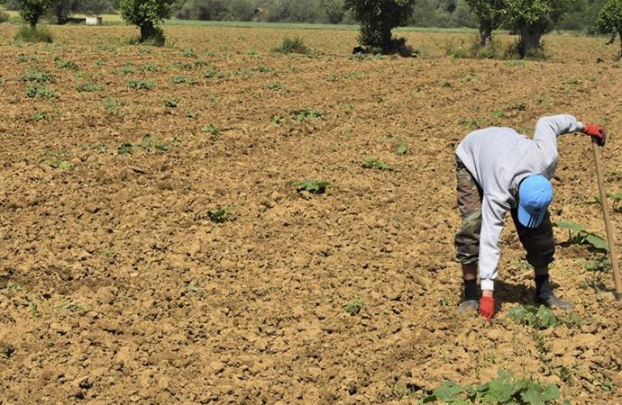 Organik Tarım ve İyi Tarım 2019 istatistikleri açıklandı
