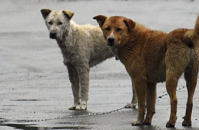 Hindistan'da bir eyalette köpek eti satışı yasaklandı