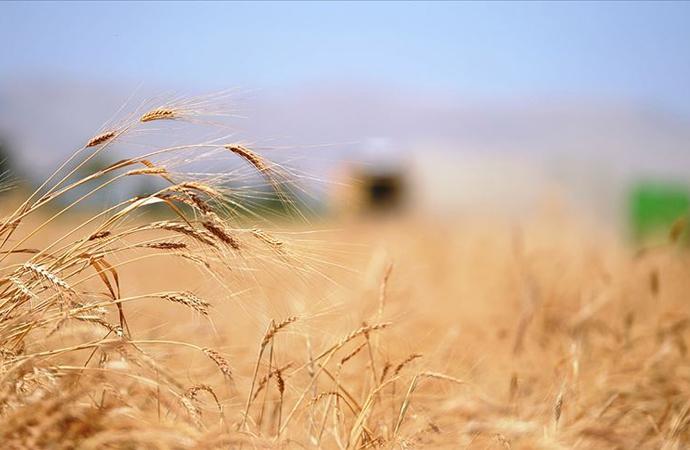 Terör örgütü YPG/PKK ve Esed rejiminin buğday kavgası