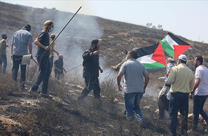Filistinlilere ait zeytin ağaçlarına saldırdılar