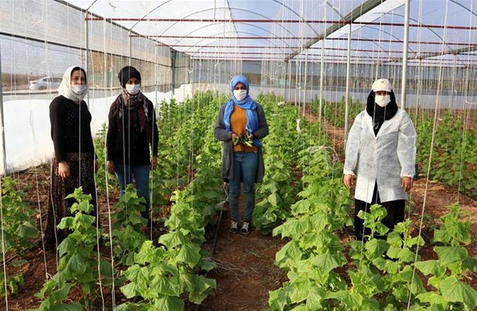 Kooperatifle güçlerini birleştiren köylü kadınlar yöresel ürünlerle gelir sağlıyor