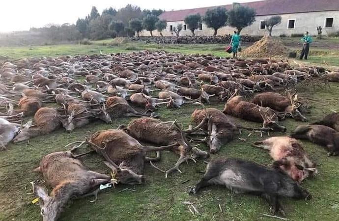 İspanyol avcılar Portekiz'de 'hayvan katliamı' yaptı