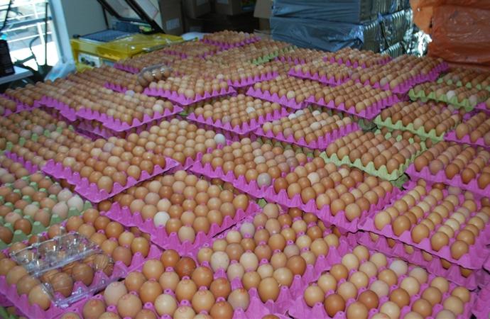 'Yumurta fiyatları, yem maliyetleri yüzünden artıyor'