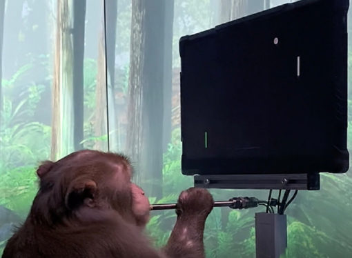 Elon Musk'ın Neuralink projesi: Maymun video oyunu oynadı