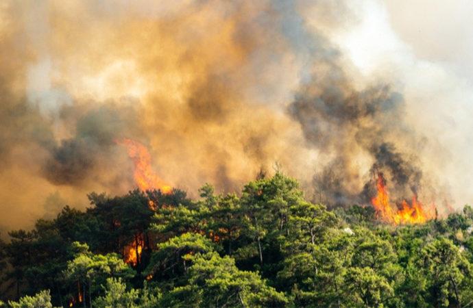Türkiye'de 10 yılda 26 bin orman yangını