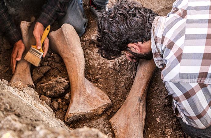 Kahramanmaraş'ta bulunan fil fosilleri incelemeye alındı