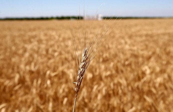 Tahıl ürünlerinde biyoçeşitlilik